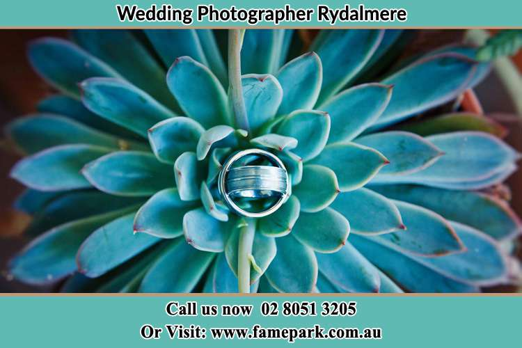 Photo of the wedding ring design at the top of the plant Rydalmere NSW 2116